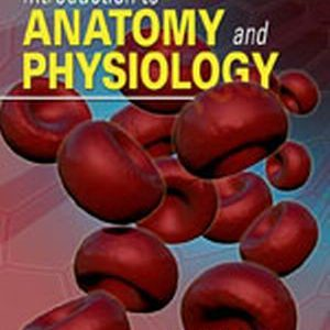 Solution Manual (Complete Download) for Introduction to Anatomy and Physiology, 1st Edition, Dr. Donald C. Rizzo, ISBN-10: 1111138443, ISBN-13: 9781111138448, Instantly Downloadable Solution Manual, Complete (ALL CHAPTERS) Solution Manual