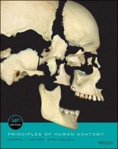 Test bank for Principles of Human Anatomy 4th Edition by Tortora